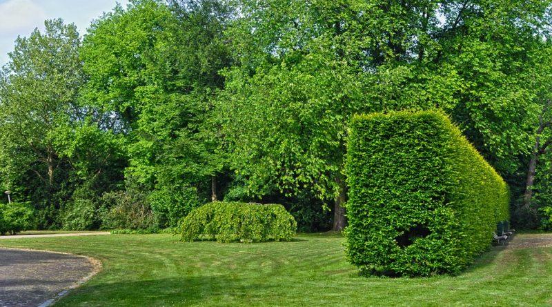 Živý plot jako lemování zahrady. Jaký si vybrat?