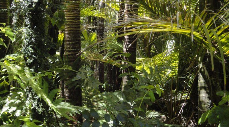 Jak můžeme pomoct Amazonskému pralesu?