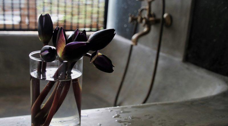 I koupelny mohou zdobit pokojové rostliny